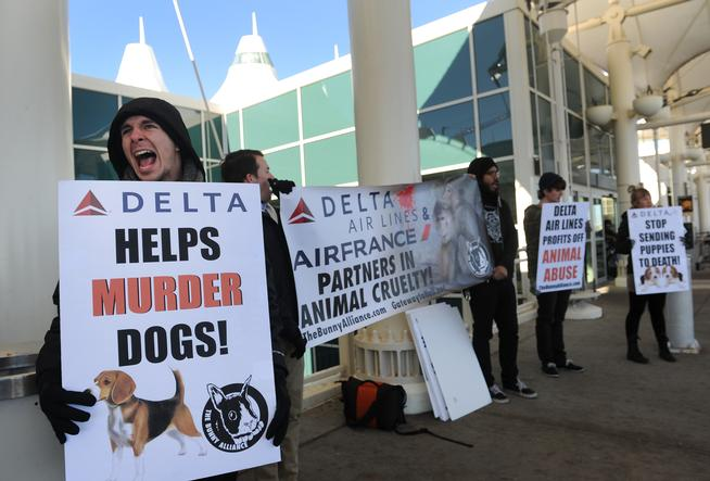 Protestors with The Bunny Alliance protest Delta Airlines and Air France because of their policy of allowing the transportation of animals being shipped to vivisection labs across the world.